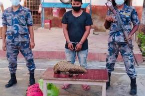 जयसपुर हुँदै भारत लैजादै गरिएको सालकसहित एक तस्कर सशस्त्रको फन्दामा